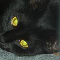 xdementedlovex's avatar