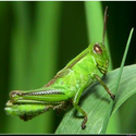 GreenGrasshopper's avatar