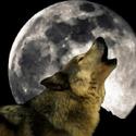 Wolfmoon's avatar