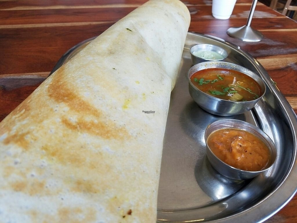 """Photo of Maya Vegetarian Chat House  by <a href=""""/members/profile/EverydayTastiness"""">EverydayTastiness</a> <br/>paper masala dosa <br/> December 26, 2016  - <a href='/contact/abuse/image/493/204709'>Report</a>"""