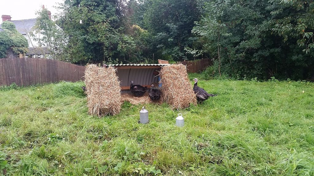 "Photo of Dean Farm Trust  by <a href=""/members/profile/konlish"">konlish</a> <br/>Turkeys 1st time we saw them they move their heads like chickens.  <br/> September 3, 2017  - <a href='/contact/abuse/image/100219/300489'>Report</a>"