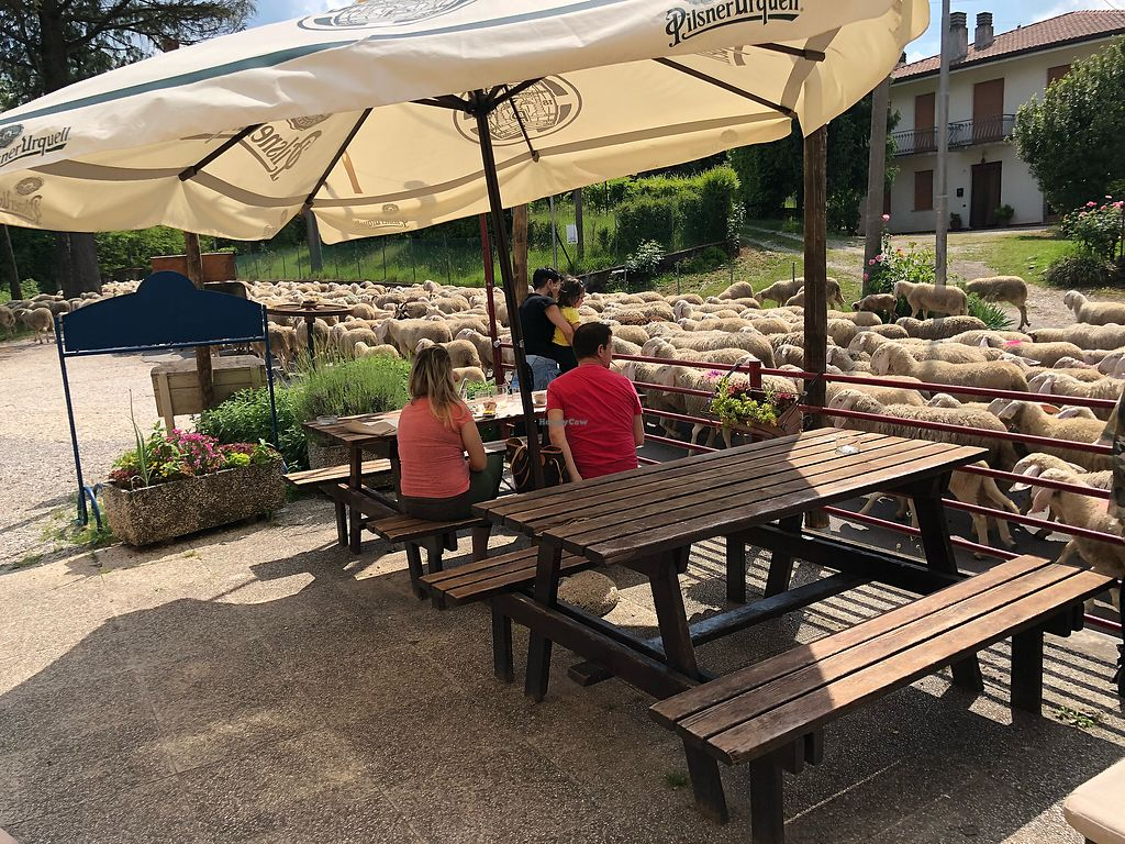 """Photo of Ecosteria Parco Santi Angeli  by <a href=""""/members/profile/JillPlamann"""">JillPlamann</a> <br/>This flock of sheep crossed in front of the restaurant while we dined! <br/> May 21, 2018  - <a href='/contact/abuse/image/101163/402746'>Report</a>"""