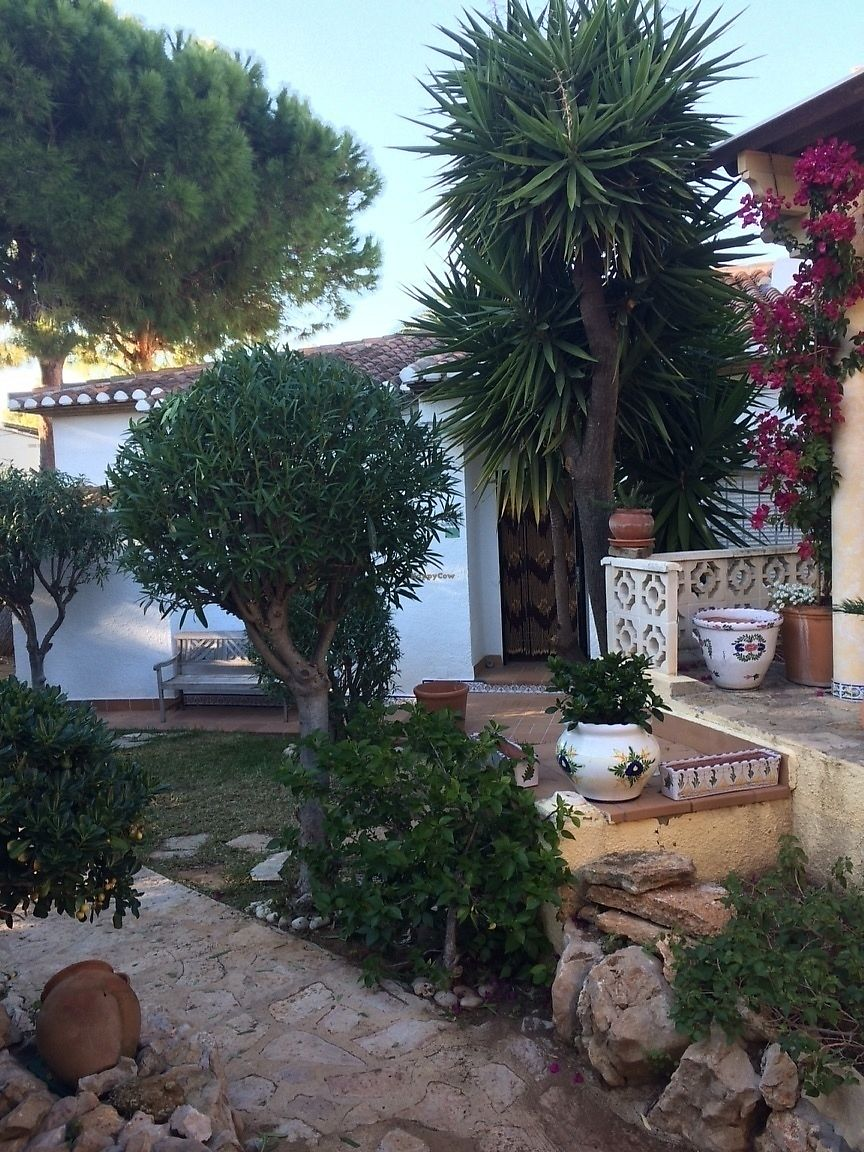 """Photo of Casa Blanca  by <a href=""""/members/profile/Gracie10"""">Gracie10</a> <br/>The garden and palm trees where we sunbathed <br/> February 15, 2018  - <a href='/contact/abuse/image/101791/359767'>Report</a>"""