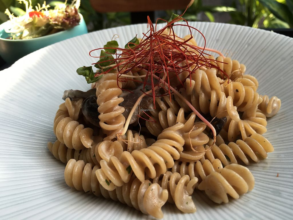 "Photo of Naturalead  by <a href=""/members/profile/Veg4Jay"">Veg4Jay</a> <br/>Whole Wheat Fusilli w/ Handmade Tofu Sauce & Mushrooms <br/> October 13, 2017  - <a href='/contact/abuse/image/101801/314759'>Report</a>"