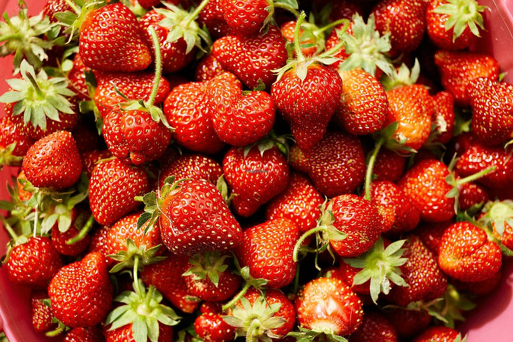 "Photo of Frinklepod Farm Store  by <a href=""/members/profile/florab"">florab</a> <br/>June is strawberry season <br/> March 14, 2018  - <a href='/contact/abuse/image/102993/370512'>Report</a>"