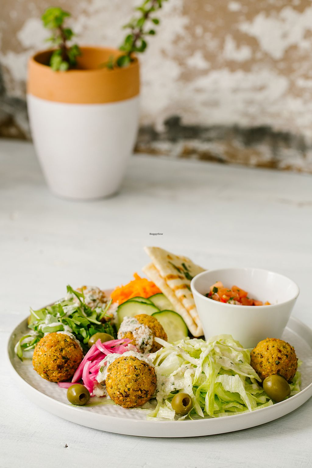 """Photo of Salti - Vegan Fast Food  by <a href=""""/members/profile/gimpel"""">gimpel</a> <br/>Falafel <br/> November 24, 2017  - <a href='/contact/abuse/image/104408/328780'>Report</a>"""