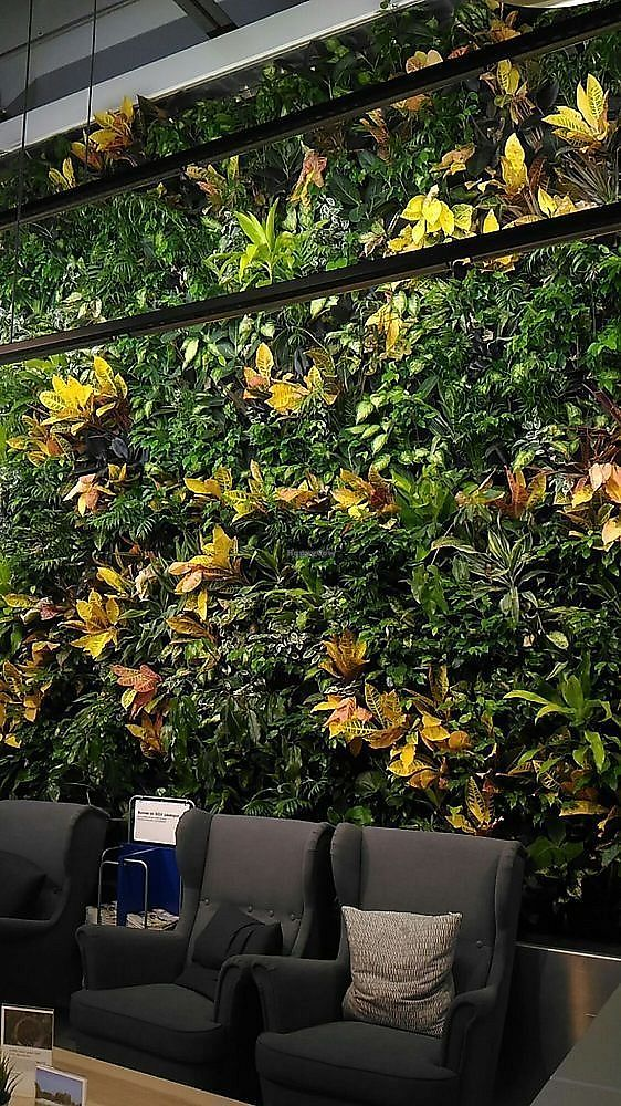 """Photo of IKEA  by <a href=""""/members/profile/QuothTheRaven"""">QuothTheRaven</a> <br/>plants <br/> November 27, 2017  - <a href='/contact/abuse/image/105992/329786'>Report</a>"""