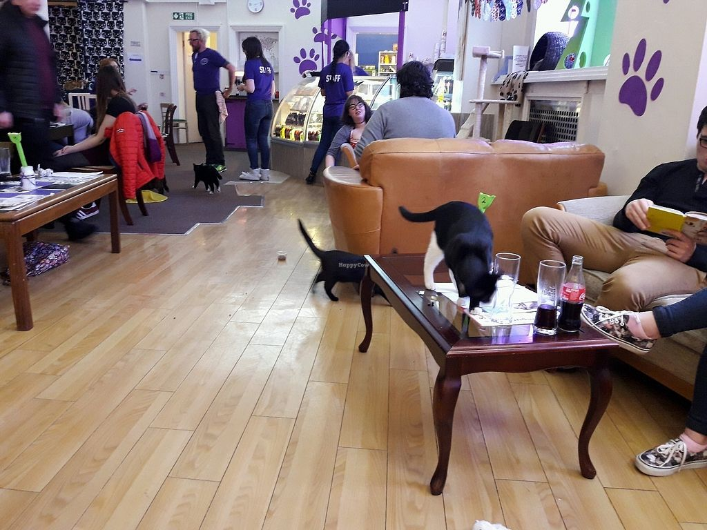 "Photo of Purple Cat Cafe  by <a href=""/members/profile/Arta"">Arta</a> <br/>Cafe <br/> February 1, 2018  - <a href='/contact/abuse/image/107773/353677'>Report</a>"