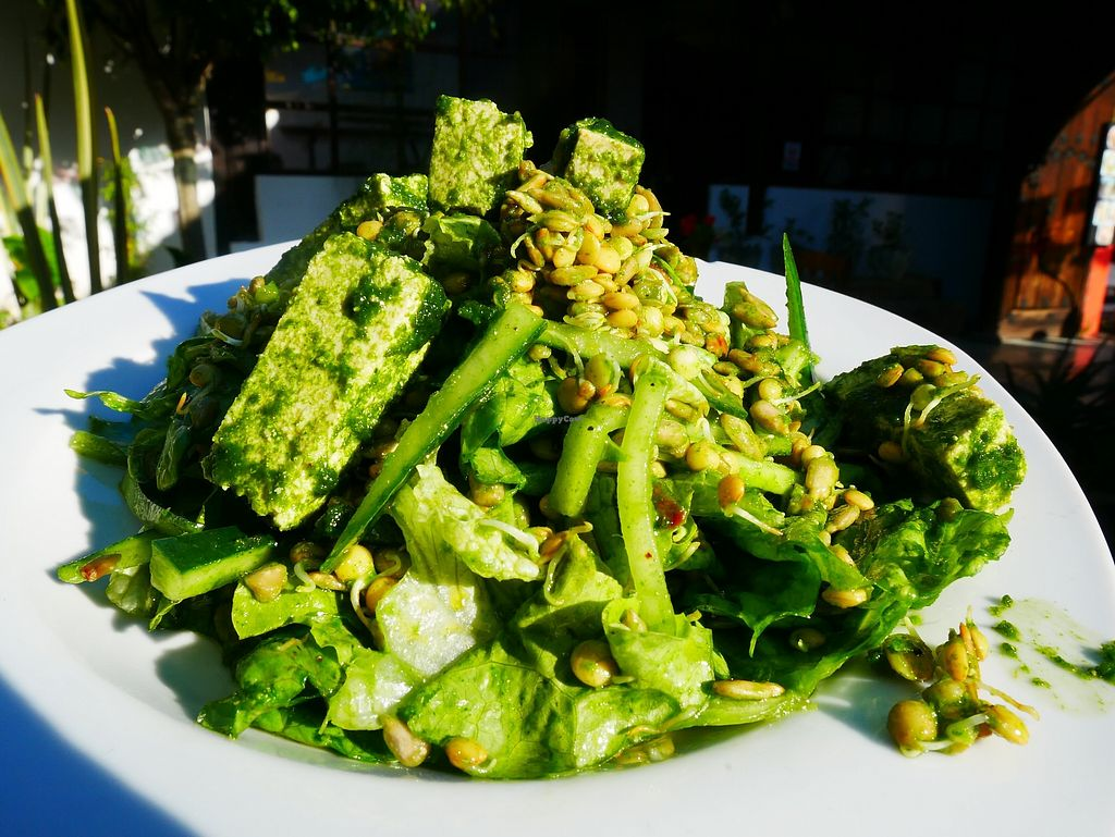"Photo of Jardin Tonantzin  by <a href=""/members/profile/manimu"">manimu</a> <br/>Green Tofu Salad <br/> January 15, 2018  - <a href='/contact/abuse/image/109184/346803'>Report</a>"
