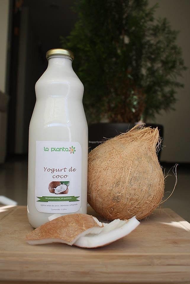 """Photo of La Planta Cafe  by <a href=""""/members/profile/MeylinAlvarez"""">MeylinAlvarez</a> <br/>Yogurt de coco, sin lacteos!!! tienes que probarlo <br/> March 27, 2018  - <a href='/contact/abuse/image/112501/376654'>Report</a>"""