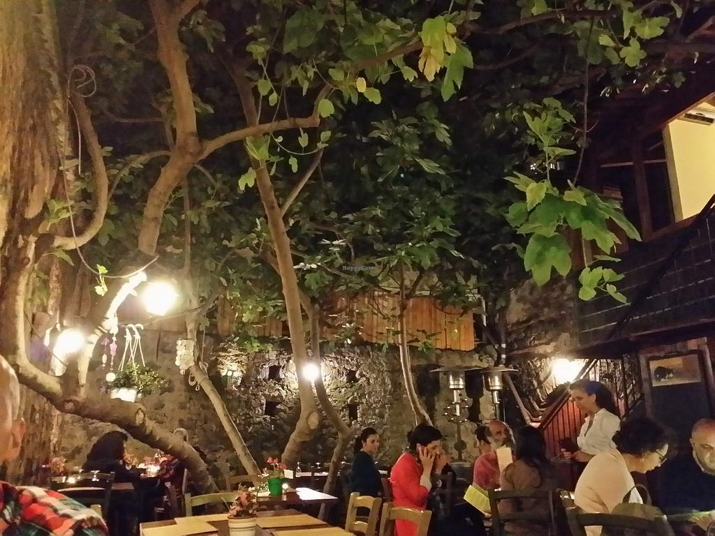 "Photo of Haiku  by <a href=""/members/profile/SrdjanMoraca"">SrdjanMoraca</a> <br/>The beautiful patio in the back.  <br/> June 6, 2015  - <a href='/contact/abuse/image/11513/104910'>Report</a>"