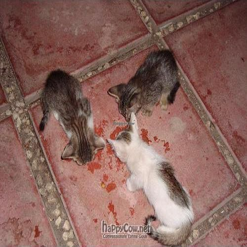 """Photo of Haiku  by <a href=""""/members/profile/MomOf2Gremlins"""">MomOf2Gremlins</a> <br/>Hungry kittens eating some of my Tempeh :)  <br/> September 18, 2011  - <a href='/contact/abuse/image/11513/10703'>Report</a>"""