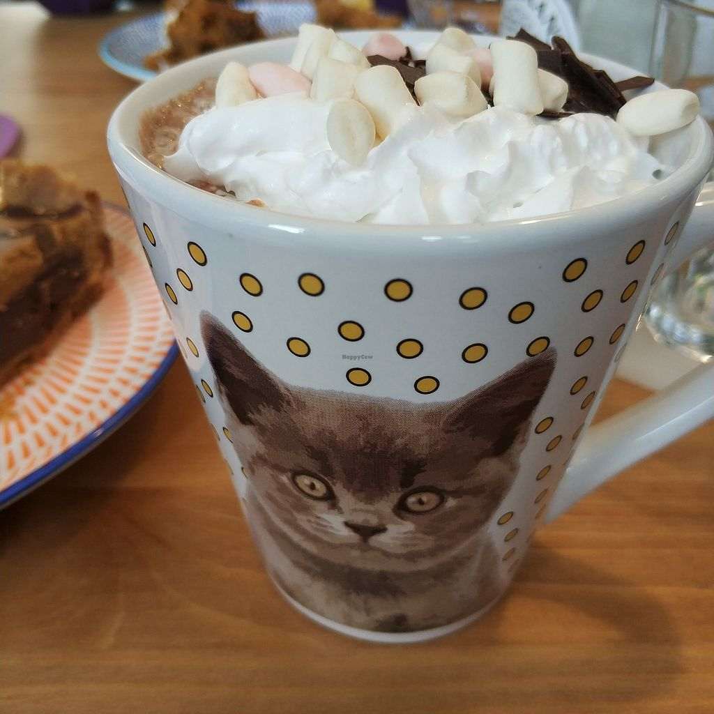 """Photo of Meow Cafe  by <a href=""""/members/profile/madhatterspantry"""">madhatterspantry</a> <br/>Hot Chocolate with Cream and Marshmallows <br/> April 15, 2018  - <a href='/contact/abuse/image/115728/386249'>Report</a>"""