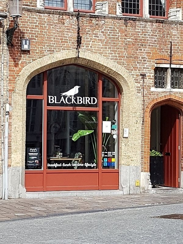 """Photo of Blackbird  by <a href=""""/members/profile/TrudiBruges"""">TrudiBruges</a> <br/>front <br/> April 16, 2018  - <a href='/contact/abuse/image/117705/386752'>Report</a>"""