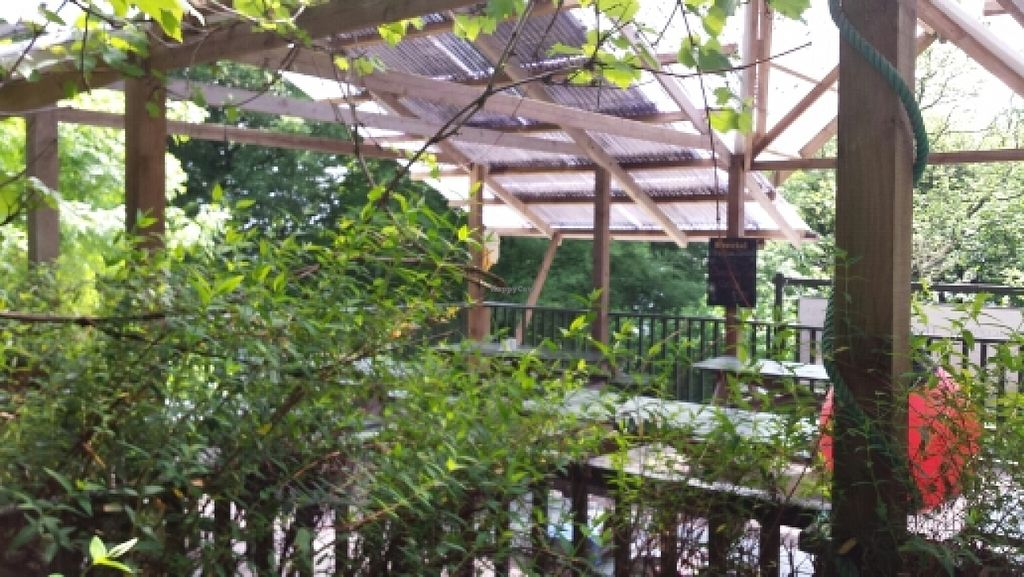 """Photo of Tree-Top Cafe  by <a href=""""/members/profile/Good%20for%20Vegans"""">Good for Vegans</a> <br/>Seating area <br/> June 2, 2016  - <a href='/contact/abuse/image/11818/151907'>Report</a>"""