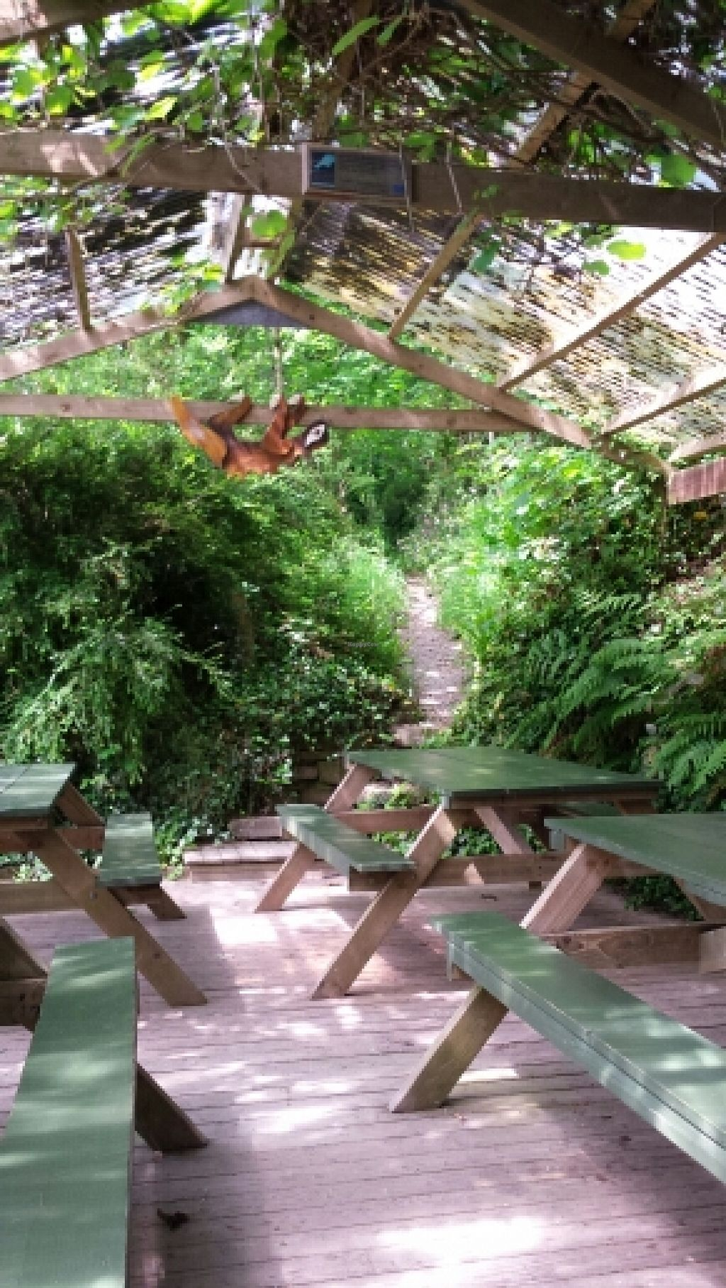 """Photo of Tree-Top Cafe  by <a href=""""/members/profile/Good%20for%20Vegans"""">Good for Vegans</a> <br/>Seating area <br/> June 2, 2016  - <a href='/contact/abuse/image/11818/151908'>Report</a>"""