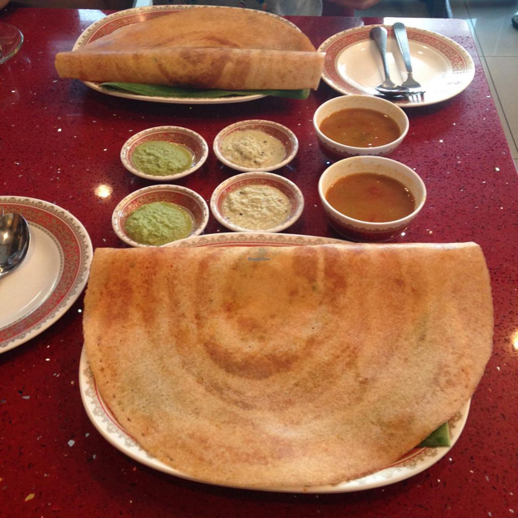 """Photo of Dosa King  by <a href=""""/members/profile/MotherOfDragonFruit"""">MotherOfDragonFruit</a> <br/>Masala Dosa <br/> April 7, 2015  - <a href='/contact/abuse/image/11924/98221'>Report</a>"""