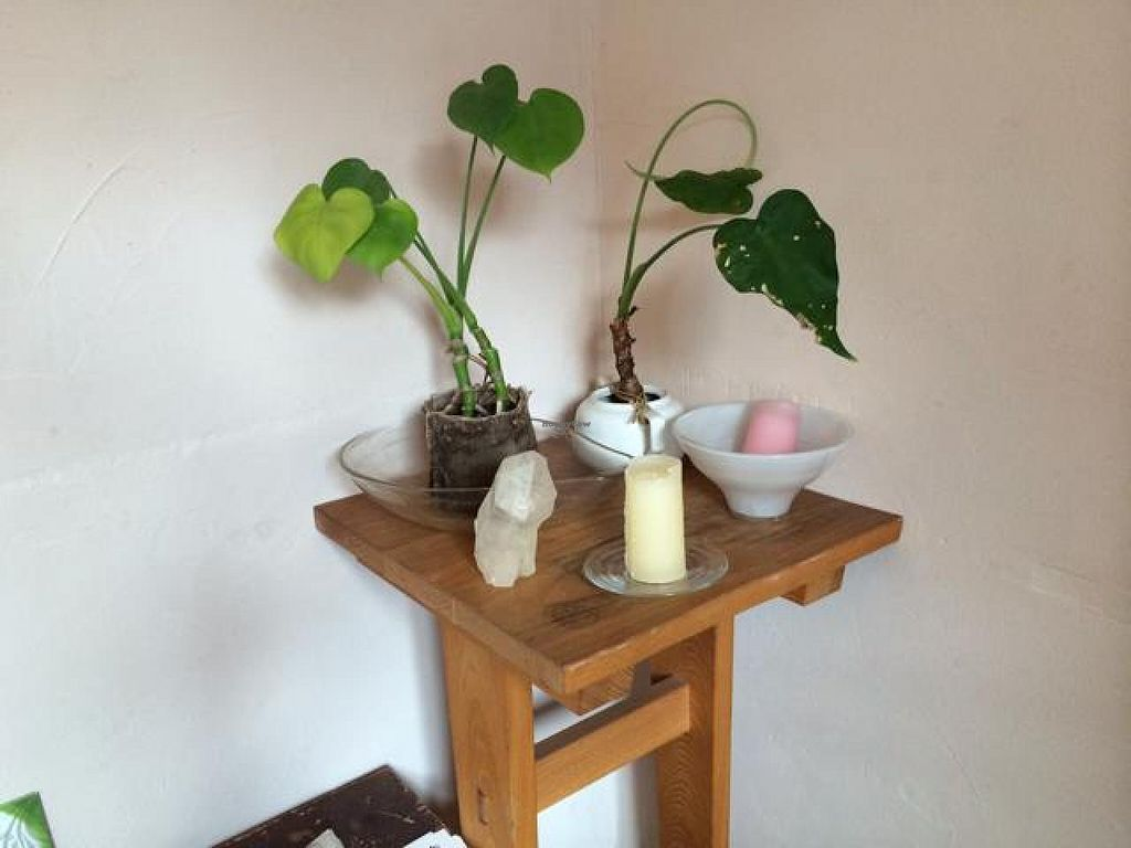 "Photo of Aoi Sora Organic Cafe  by <a href=""/members/profile/JesseWaugh"">JesseWaugh</a> <br/>plants <br/> May 1, 2014  - <a href='/contact/abuse/image/13094/69031'>Report</a>"