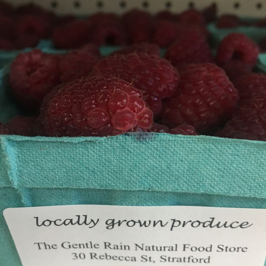 """Photo of Gentle Rain Natural Foods  by <a href=""""/members/profile/Nourished"""">Nourished</a> <br/>beautiful local berries! <br/> August 24, 2016  - <a href='/contact/abuse/image/1311/171156'>Report</a>"""