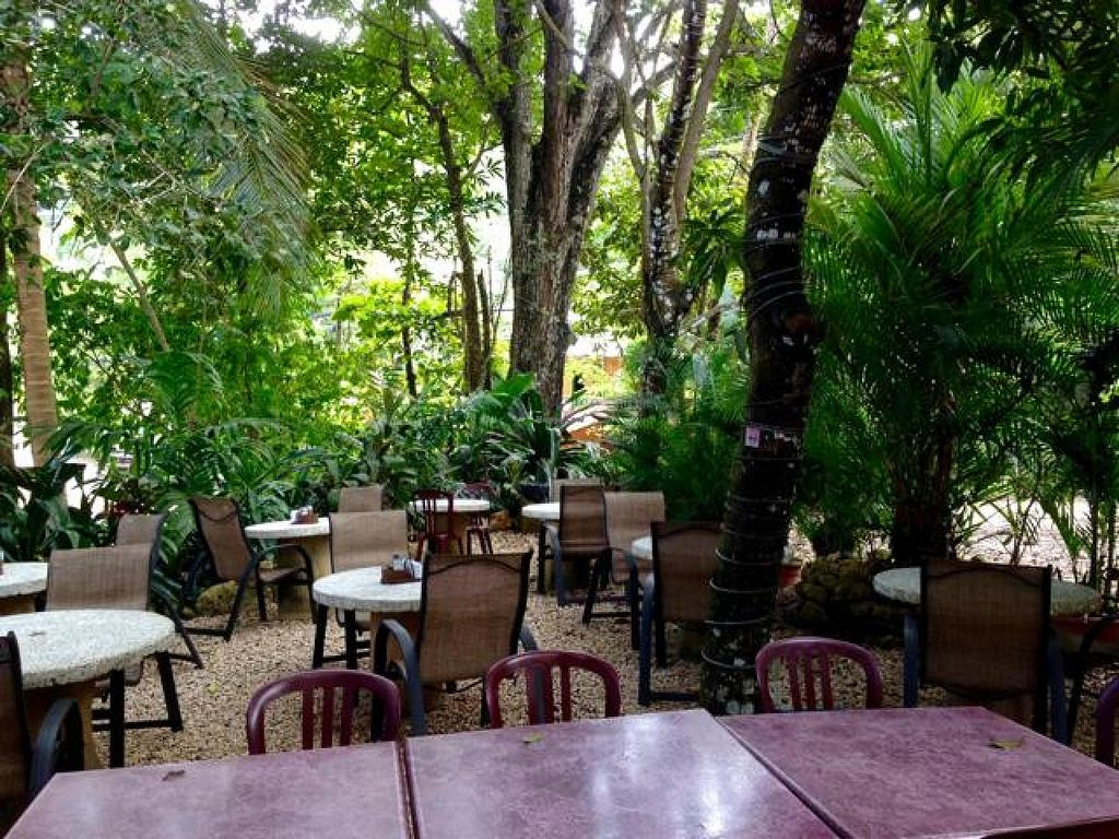 "Photo of El Sano Banano Restaurant  by <a href=""/members/profile/happycowgirl"">happycowgirl</a> <br/>outdoor seating area in back of restaurant  <br/> October 9, 2014  - <a href='/contact/abuse/image/14170/82435'>Report</a>"