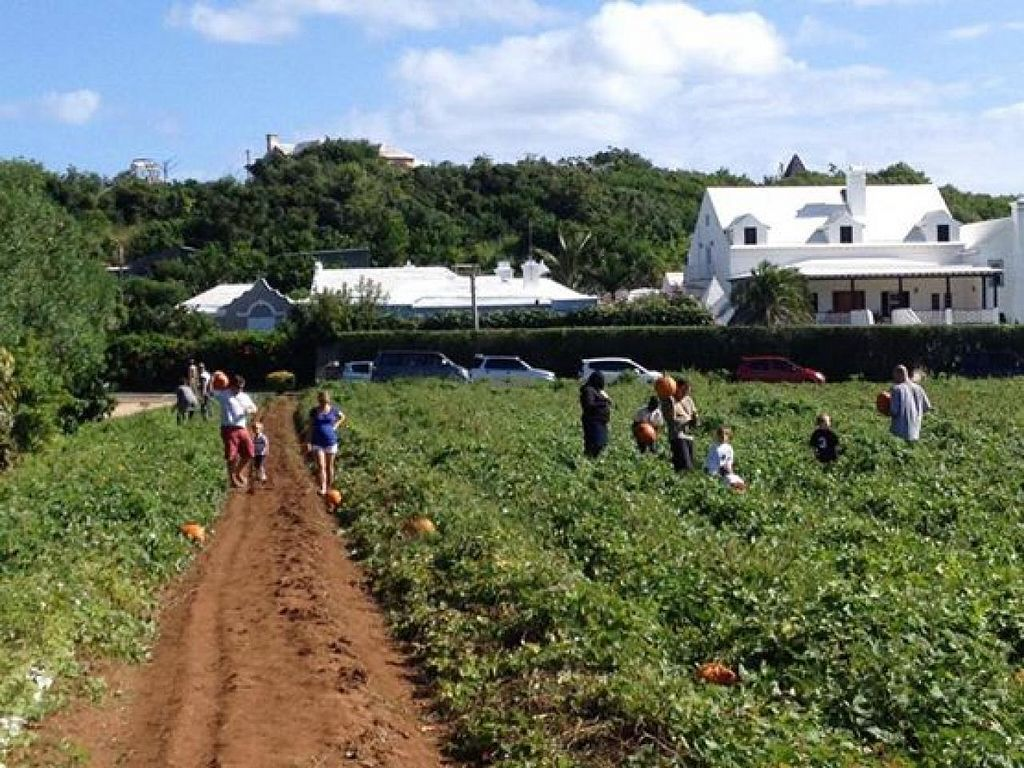 """Photo of Wadson's Farm  by <a href=""""/members/profile/community"""">community</a> <br/>Farmer's Market <br/> May 6, 2014  - <a href='/contact/abuse/image/14409/69500'>Report</a>"""