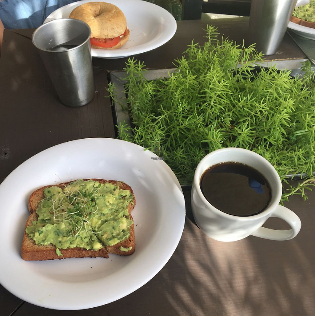 "Photo of Date & Thyme - Help Yourself  by <a href=""/members/profile/Kristally"">Kristally</a> <br/>avocado toast <br/> November 25, 2016  - <a href='/contact/abuse/image/16088/194213'>Report</a>"