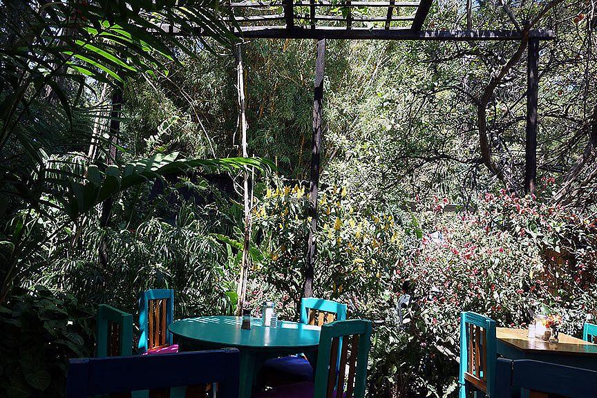 "Photo of Deli Jasmin  by <a href=""/members/profile/czarinajoanne"">czarinajoanne</a> <br/>Garden setting <br/> March 17, 2018  - <a href='/contact/abuse/image/18914/372154'>Report</a>"