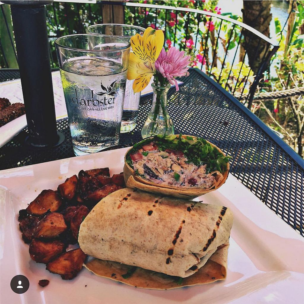 """Photo of Darbster - West Palm Beach  by <a href=""""/members/profile/NatashaJason"""">NatashaJason</a> <br/>Tarragon Chicken Salad Wrap <br/> May 9, 2017  - <a href='/contact/abuse/image/19007/257288'>Report</a>"""