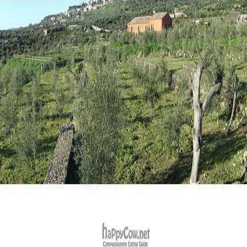 "Photo of Fontana del Cherubino  by <a href=""/members/profile/danilar"">danilar</a> <br/>The farm <br/> February 27, 2010  - <a href='/contact/abuse/image/19359/3830'>Report</a>"