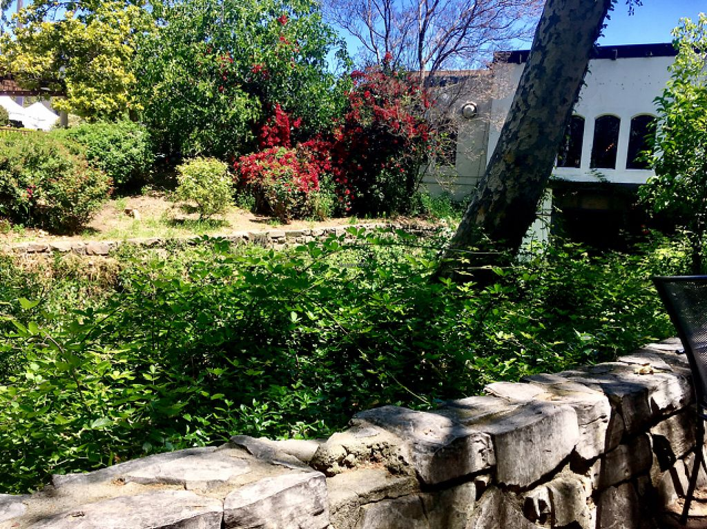 """Photo of Bliss Cafe  by <a href=""""/members/profile/milos99"""">milos99</a> <br/>creek side view of back patio <br/> May 20, 2017  - <a href='/contact/abuse/image/19617/260662'>Report</a>"""