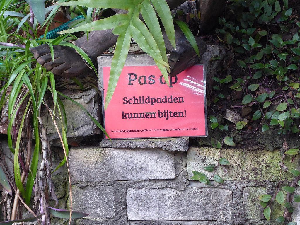 """Photo of Het Paradijs  by <a href=""""/members/profile/v_mdj"""">v_mdj</a> <br/>Watch out for the tortoises <br/> March 4, 2017  - <a href='/contact/abuse/image/19680/232614'>Report</a>"""