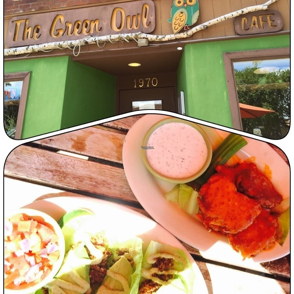 """Photo of The Green Owl Cafe  by <a href=""""/members/profile/Andi12"""">Andi12</a> <br/>Raw tacos and devil wings <br/> August 28, 2016  - <a href='/contact/abuse/image/19743/172013'>Report</a>"""