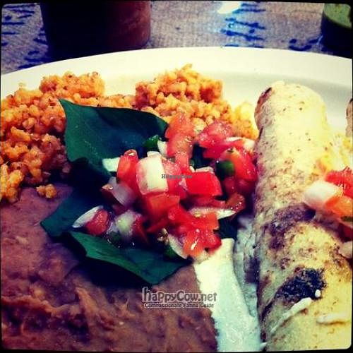 """Photo of CLOSED: Radical Eats  by <a href=""""/members/profile/windysgarden"""">windysgarden</a> <br/>Mushroom enchilada plate at Radical Eats. Houston, TX <br/> September 2, 2011  - <a href='/contact/abuse/image/22467/10386'>Report</a>"""