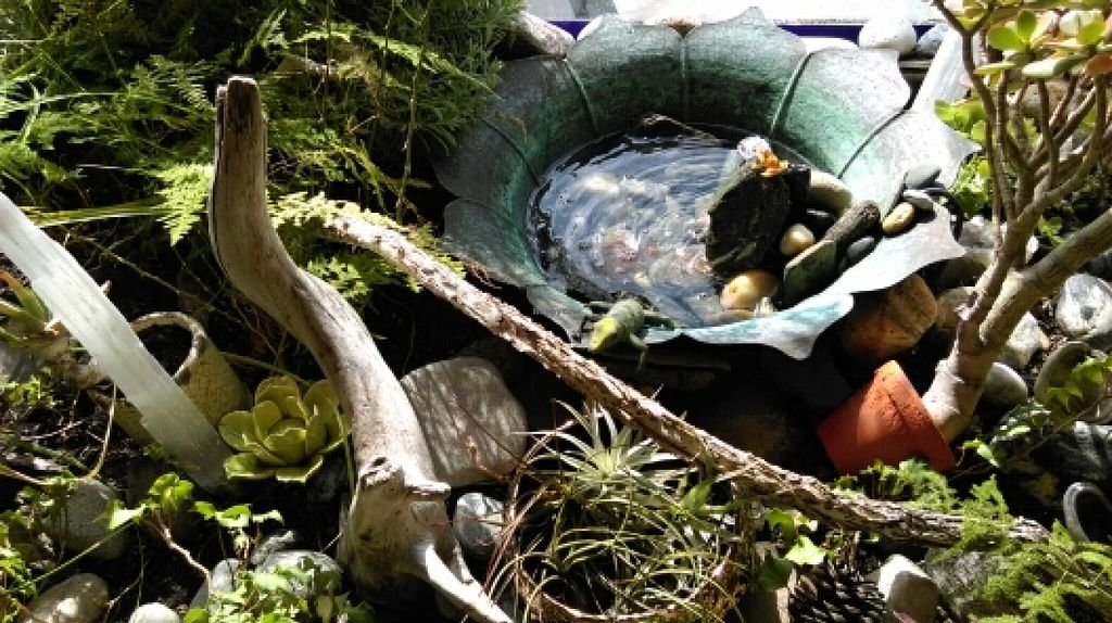 """Photo of Life Alive Organic Cafe  by <a href=""""/members/profile/bilby"""">bilby</a> <br/>terrarium in front window <br/> March 7, 2016  - <a href='/contact/abuse/image/26051/139116'>Report</a>"""