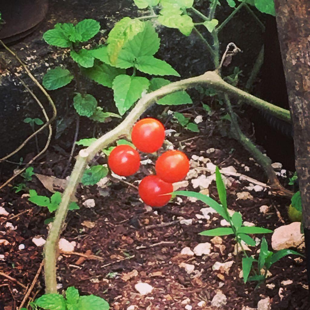 "Photo of Las 3 Puertas  by <a href=""/members/profile/SofiaReyes-Retana"">SofiaReyes-Retana</a> <br/>Our orchard <br/> December 14, 2017  - <a href='/contact/abuse/image/27023/335587'>Report</a>"