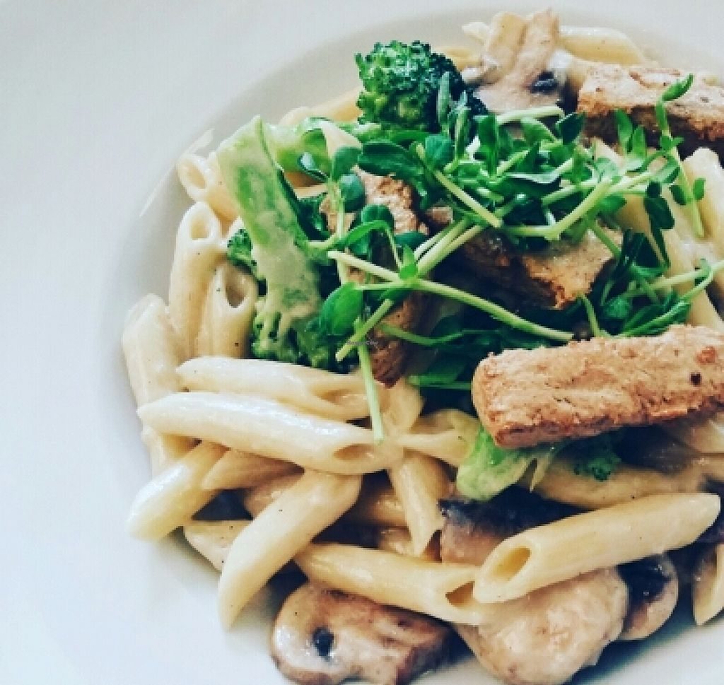 """Photo of Loving Hut  by <a href=""""/members/profile/anne420"""">anne420</a> <br/>Cashew cream sauce with penne and mushroom  <br/> January 20, 2016  - <a href='/contact/abuse/image/27481/133071'>Report</a>"""