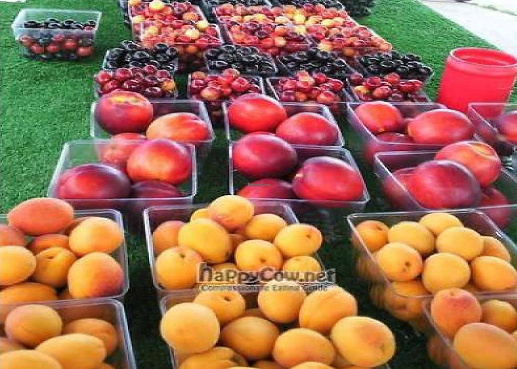 """Photo of Fruit Dock  by <a href=""""/members/profile/happycowgirl"""">happycowgirl</a> <br/> August 25, 2011  - <a href='/contact/abuse/image/28045/204832'>Report</a>"""