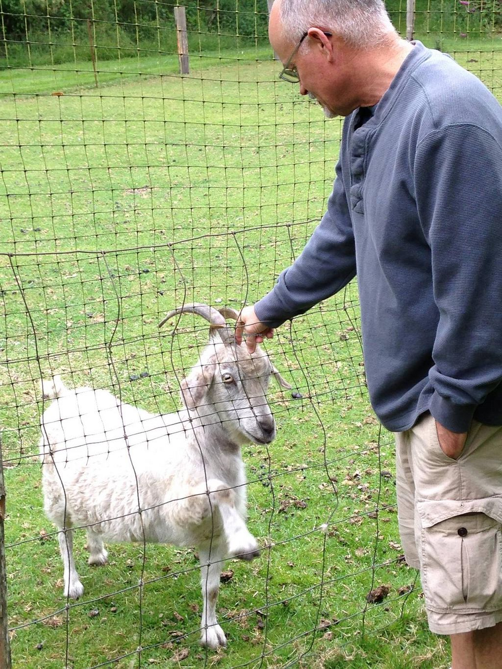 """Photo of Someday Farm Vegan Bed and Breakfast  by <a href=""""/members/profile/BethanyDavis"""">BethanyDavis</a> <br/>'Could you, would you, with a goat?'  'YES!  Pet me please!!!' <br/> August 3, 2014  - <a href='/contact/abuse/image/30230/75903'>Report</a>"""
