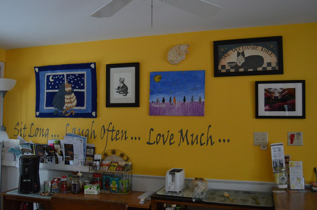 """Photo of The Ginger Cat B and B  by <a href=""""/members/profile/Vegan%20GiGi"""">Vegan GiGi</a> <br/>Kitchen decorations at Ginger Cat B&B <br/> October 8, 2016  - <a href='/contact/abuse/image/30660/180596'>Report</a>"""
