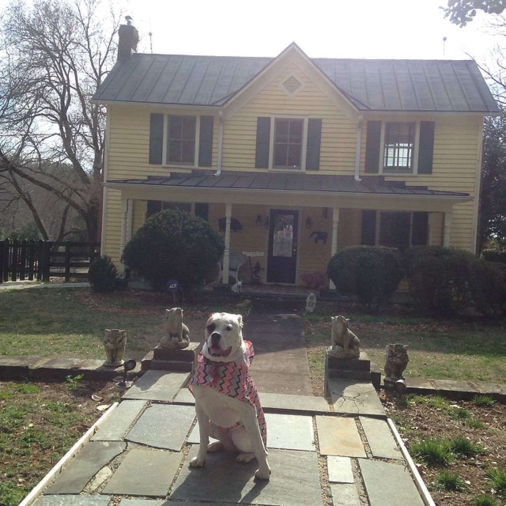 "Photo of The White Pig Bed and Breakfast  by <a href=""/members/profile/clarebear9"">clarebear9</a> <br/>Main house  <br/> February 26, 2017  - <a href='/contact/abuse/image/30673/230875'>Report</a>"