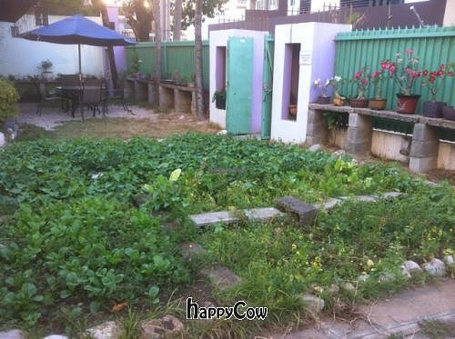 """Photo of Jardin Verde  by <a href=""""/members/profile/T-Funk"""">T-Funk</a> <br/>Garden <br/> April 26, 2013  - <a href='/contact/abuse/image/31149/47420'>Report</a>"""