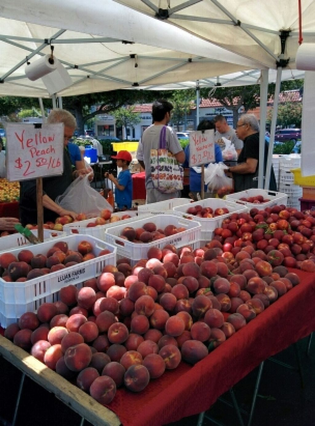 """Photo of Belmont Farmers' Market  by <a href=""""/members/profile/alexandra_vegan"""">alexandra_vegan</a> <br/>conventional produce <br/> June 15, 2016  - <a href='/contact/abuse/image/31963/153947'>Report</a>"""
