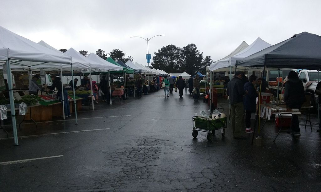 """Photo of College of San Mateo Farmers' Market  by <a href=""""/members/profile/alexandra_vegan"""">alexandra_vegan</a> <br/>On a rainy day, still loads of farmers <br/> March 6, 2016  - <a href='/contact/abuse/image/31968/139053'>Report</a>"""