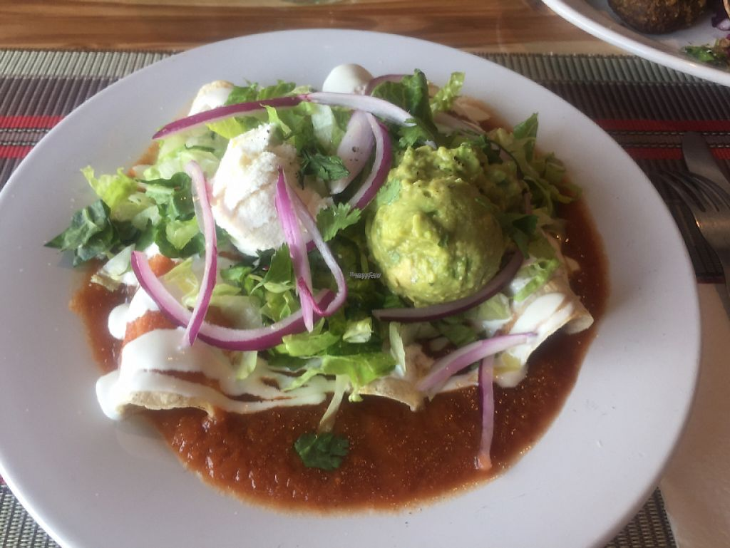 """Photo of Vegan Planet  by <a href=""""/members/profile/LaylaLm"""">LaylaLm</a> <br/>enchiladas  <br/> April 7, 2017  - <a href='/contact/abuse/image/32976/245333'>Report</a>"""