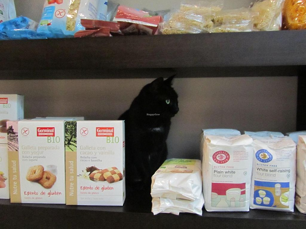 "Photo of Quintal Bioshop  by <a href=""/members/profile/BlisterBlue"">BlisterBlue</a> <br/>Cat in the shelves of the store :-) <br/> November 7, 2014  - <a href='/contact/abuse/image/33822/84898'>Report</a>"