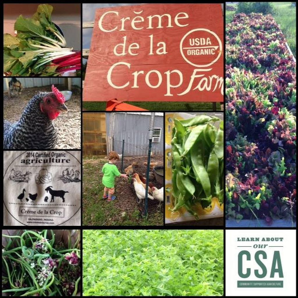 "Photo of Creme de la Crop  by <a href=""/members/profile/LeannLandgrebePelzel"">LeannLandgrebePelzel</a> <br/>2014 CSA <br/> January 14, 2015  - <a href='/contact/abuse/image/34514/90361'>Report</a>"