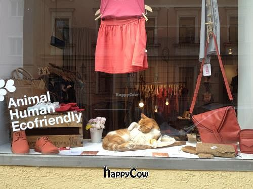 """Photo of DearGoods  by <a href=""""/members/profile/DearGoods"""">DearGoods</a> <br/>DearGoods Baldestrasse 13 with Cat 'Fritz' in the window <br/> May 29, 2013  - <a href='/contact/abuse/image/35316/48902'>Report</a>"""