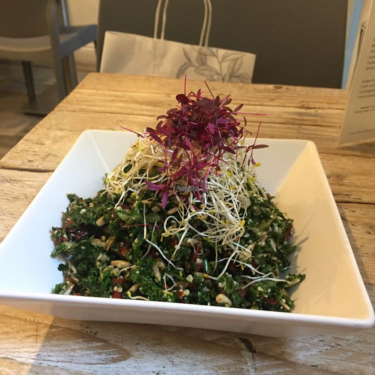 """Photo of CLOSED: Nama Artisan Raw Foods  by <a href=""""/members/profile/Theetif"""">Theetif</a> <br/>kale salad <br/> October 14, 2016  - <a href='/contact/abuse/image/36686/182083'>Report</a>"""