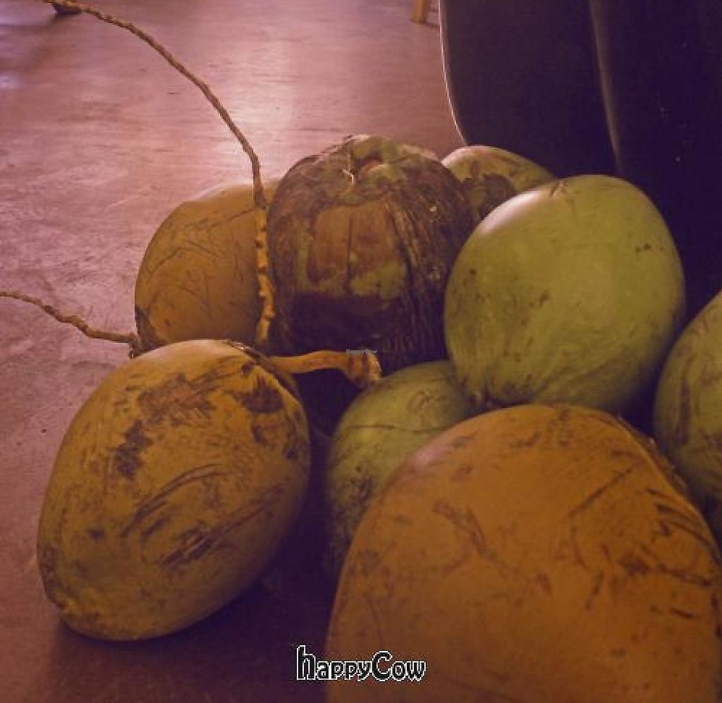 """Photo of Bamboo Fresh  by <a href=""""/members/profile/april_love7"""">april_love7</a> <br/>Fresh coconuts! Yummmmmm!!!! <br/> February 10, 2013  - <a href='/contact/abuse/image/36864/199604'>Report</a>"""