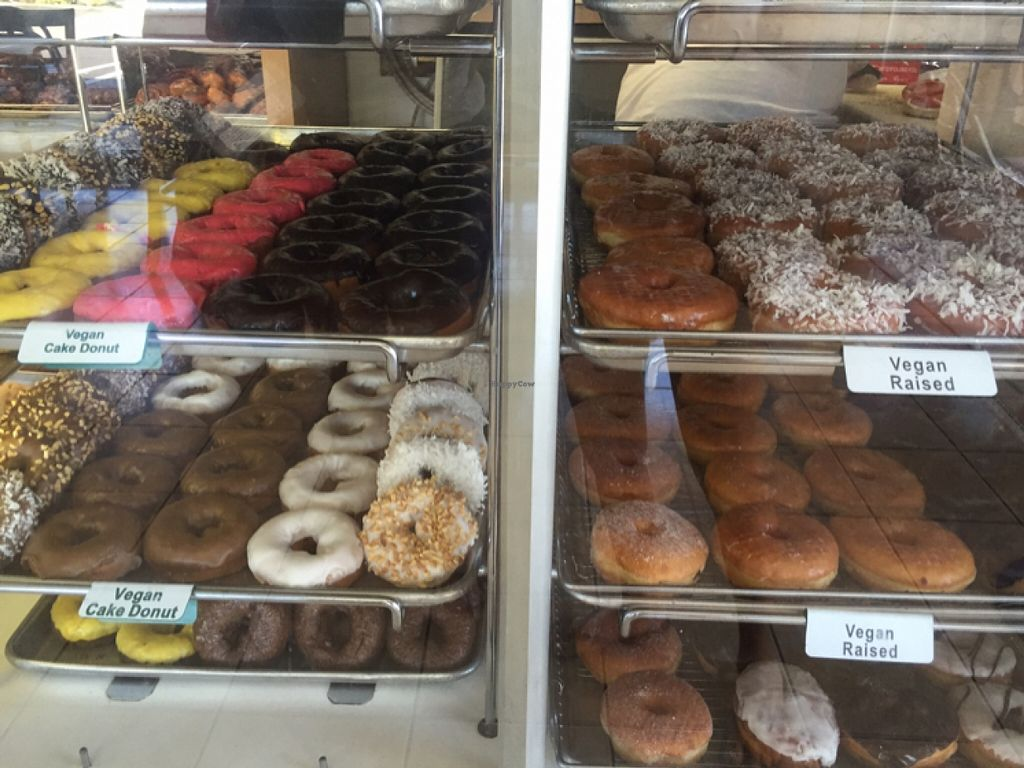 """Photo of The Donuttery  by <a href=""""/members/profile/amyrrobles"""">amyrrobles</a> <br/>ALL THESE VEGAN DONUTS <br/> February 21, 2016  - <a href='/contact/abuse/image/37197/137252'>Report</a>"""